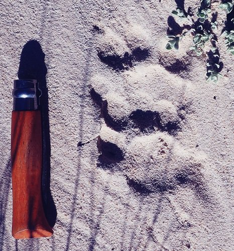 leopard footprint on trail