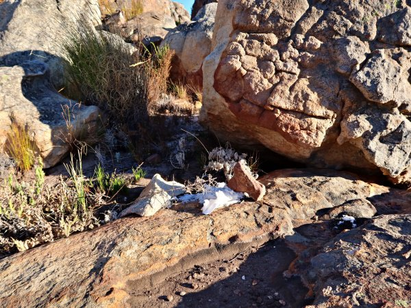 used toilet paper in the Cederberg Wilderness Area